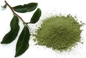 extreme nitro-ingredients-green tea
