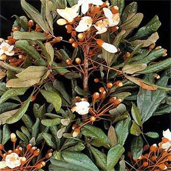 Herbal Health LLC EnhanceRx Male Enhancement Components