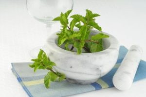 Pepper mint extract