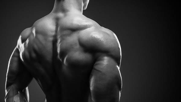 muscularback