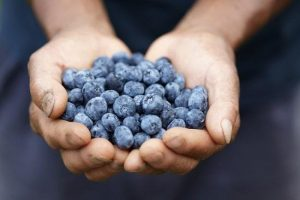preview-full-handful-of-blueberries
