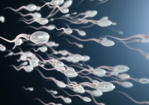 sperm count, ejaculation